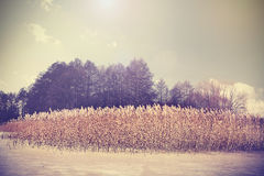 Vintage retro toned image of lake in winter Stock Photography