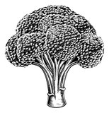 Vintage retro woodcut broccoli Stock Photo