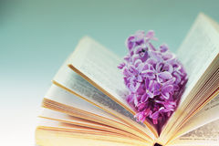 Vintage romantic background with old book, lilac flower, and little seashell. Retro toning image stock photography