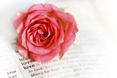 Vintage romantic page with pink rose. Vintage romantic page with one pink rose Stock Photography