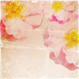 Vintage romantic paper background Stock Image