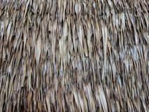 Vintage roof made from dry palm leaf. royalty free stock photography