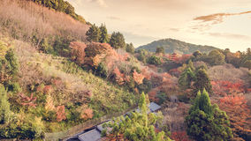 Vintage roof and old building among with colorful from autumn fu Royalty Free Stock Photos