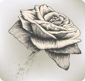 Vintage Rosa, mão-desenho. Ilustração do vetor. Fotografia de Stock Royalty Free