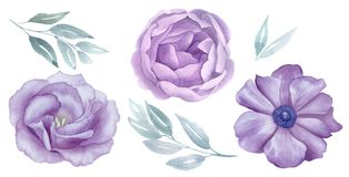 Vintage rosado y sistema del watercolour de las flores de la púrpura Flor de Rose y de la anémona saludo, invitación, boda, tarje Fotos de archivo
