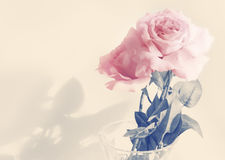 Vintage rose Stock Images