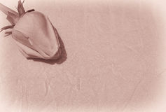 Vintage Rose photo stock