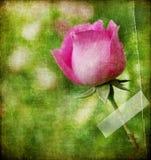 Vintage rose Stock Photos