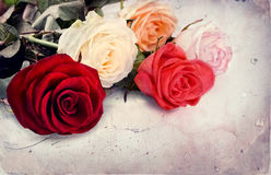 Free Vintage Rose Stock Photo - 8911570