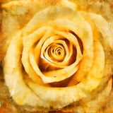 Vintage  rose Royalty Free Stock Photography