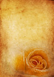 Vintage Rose Background Royalty Free Stock Photo