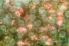 Vintage rose background Stock Images