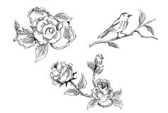Vintage rose and bird drawing Royalty Free Stock Photography