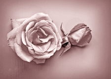 Vintage rose. Rose blossom on wood in vintage style Royalty Free Stock Photos