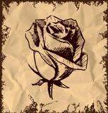 Vintage rose bud sketch illustration Stock Photography