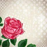 Vintage Rose Flower Background abstracta Fotografía de archivo