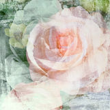Vintage rose flower painted on wall background Stock Photography