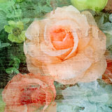 Vintage rose flower painted on wall background Royalty Free Stock Photography