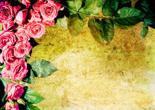 Vintage rose frame Stock Images