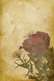 Vintage Rose Imprint Background Stock Photo
