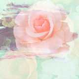 Vintage rose painted with brush stroke on wall background.  Royalty Free Stock Image