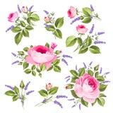Vintage rose set. Royalty Free Stock Image