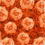 Vintage rose texture Stock Photo