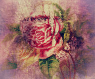Vintage rose Stock Image