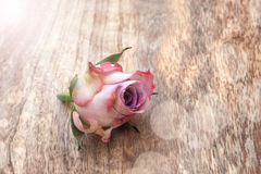 Vintage rose on wood Stock Images