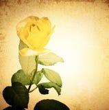 Vintage Rose Stock Images