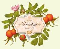 Vintage rosehip banner. Stock Image