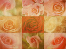 Vintage roses. Retro valentine card collection with vintage roses Stock Photo