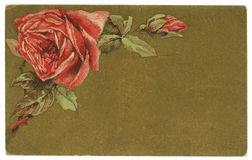 Vintage Roses Background Greeting Card. Red Roses Background Paper Texture Vintage Early 1900s Postcard Stock Photos