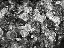 Vintage roses. Royalty Free Stock Photography