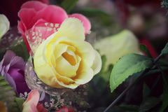 Vintage roses Stock Images