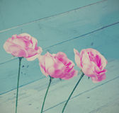 Vintage roses decoration on blue wood background Royalty Free Stock Photos