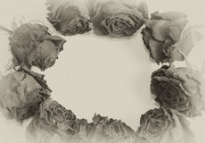 Vintage roses forming a frame Stock Images