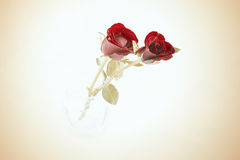 Vintage roses for St. valentine Royalty Free Stock Photography