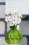 Vintage round vase  white  phloxes. Royalty Free Stock Image