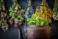 Vintage rustic tea kettle full of healthy herbs. Hanging medicinal plants on background. Herbal medicine royalty free stock photography