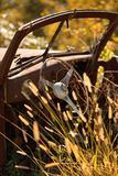 Vintage rusty car with steering wheel  in golden grass field Stock Photo