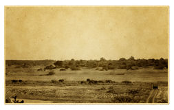 Vintage safari picture Royalty Free Stock Photography