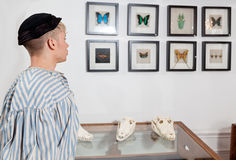 Vintage sailor butterflies alligator skulls Stock Image