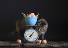 Vintage Scale Eggs and Cat. A vintage kitchen scale with with brown egg filled ceramic blue bowl on weigh platform, curious cat checking weight reading Royalty Free Stock Photos