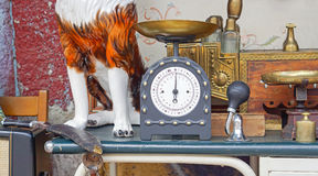 Vintage scale. Vintage style weighing scale at shelf in flea market Royalty Free Stock Photos