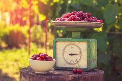 Free Vintage Scales And Cherry On The Stump Royalty Free Stock Image - 139987446