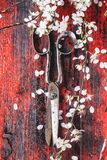 Vintage scissors and blossom branch Royalty Free Stock Photo