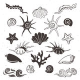 Vintage sea shells, starfish, seaweed, coral and waves. Hand drawn decorative elements on white background Stock Photography