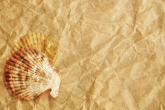 Vintage seashells presented on sheet of textured paper. Vintage seashells presented on a sheet of textured paper Royalty Free Stock Photo