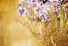 Vintage seco da flor imagem de stock royalty free